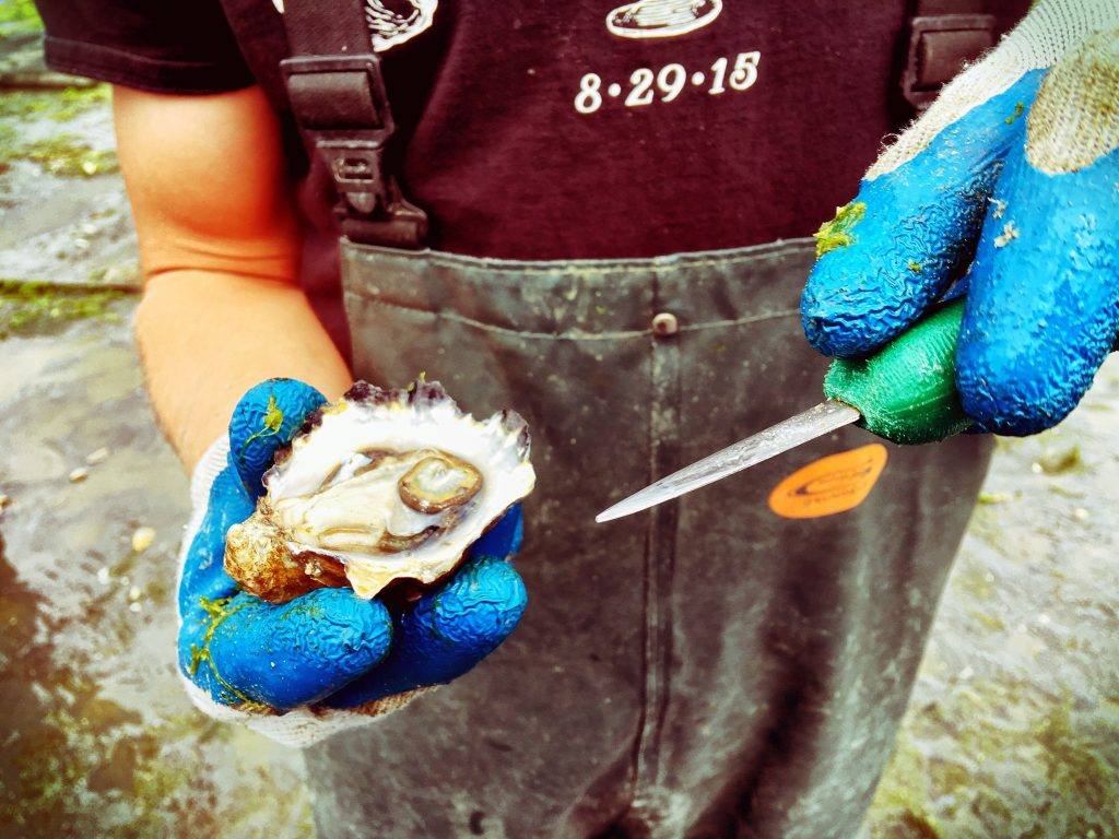 Finding Life Balance with Oyster Harvesting